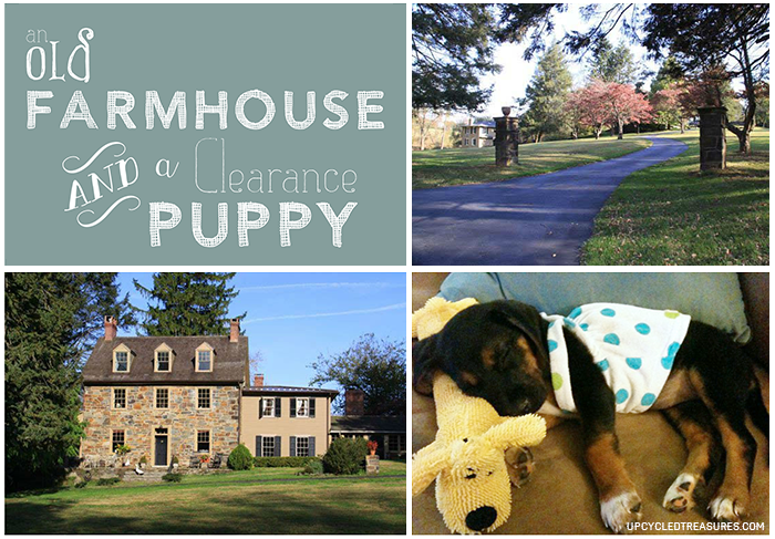 marley-and-me-farmhouse-and-a-clearance-puppy