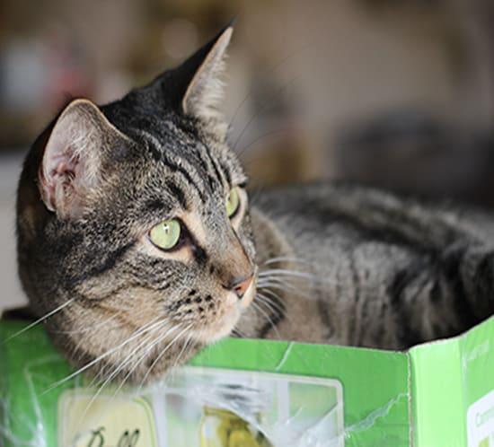 cat in a mason jar box mountainmodernlife.com