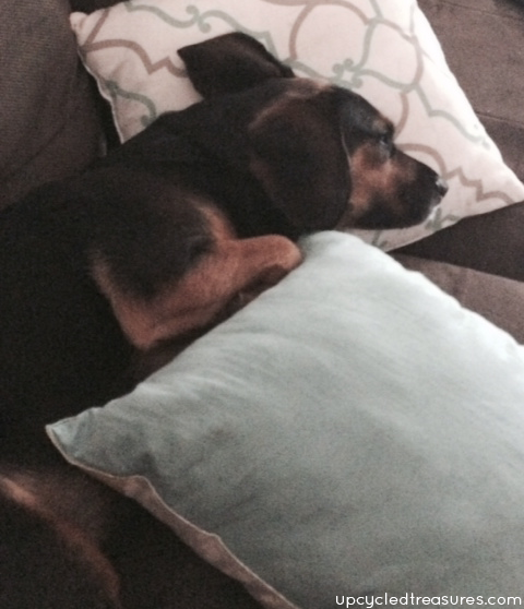 bailey-its-hard-being-a-dog-upcycledtreasures