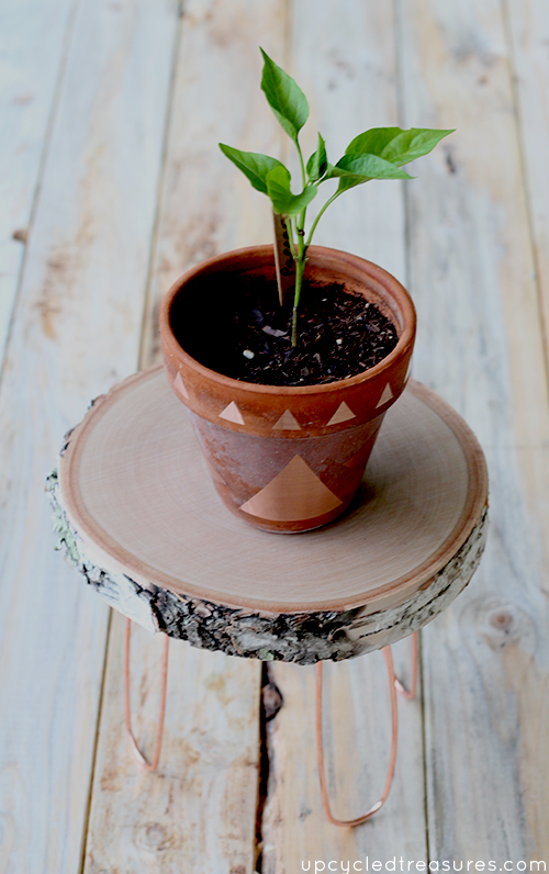 Need a creative stand to hold your plants? Check out how easy it is to create this DIY Rustic Modern Plant Stand with copper legs.