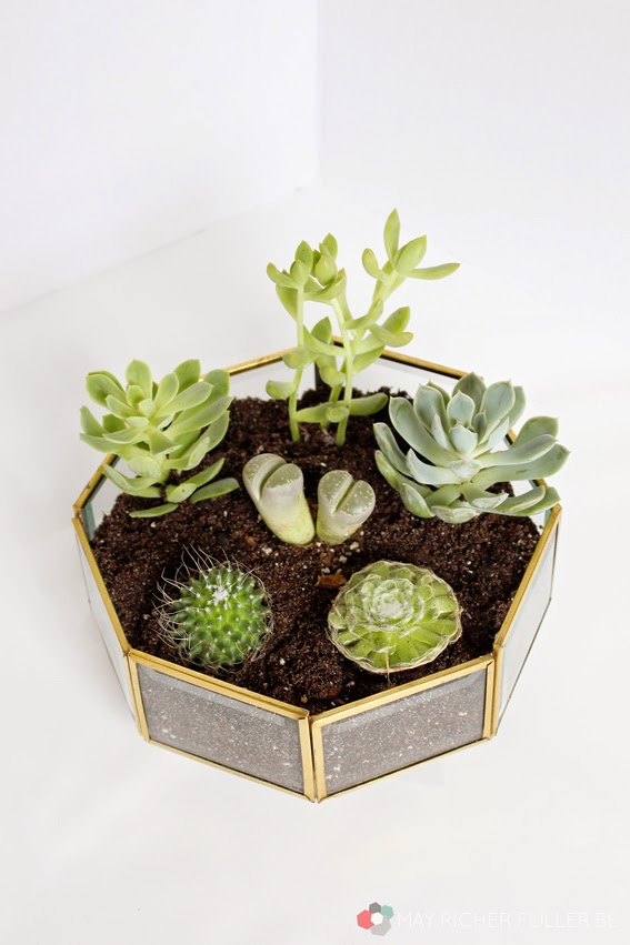 Succulent-Terrarium-Brass-Light-Fixture-8