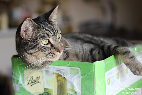 cat-in-a-mason-jar-box-upcycledtreasures