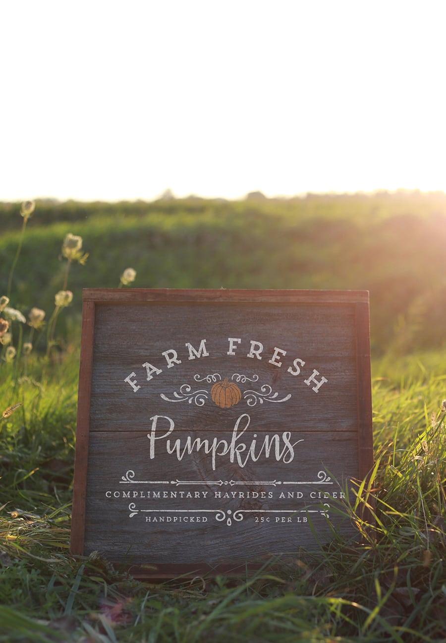 Farm Fresh Pumpkins Design from MountainModernLife.com