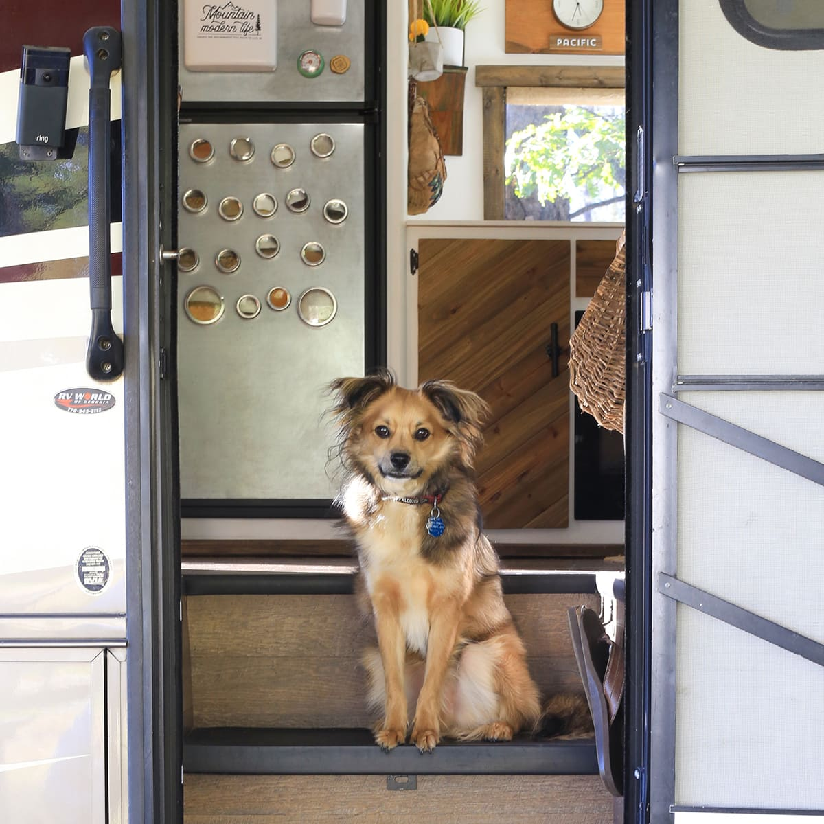 RV Pet Essentials Checklist | MountainModernLife.com