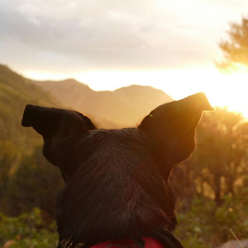 Tips For Finding Pet-Friendly Campsites | MountainModernLife.com