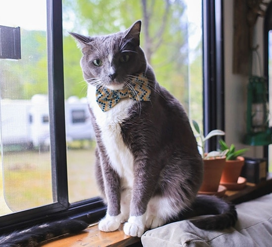help-pets-adjust-to-rv-life-mountainmodernlife.com