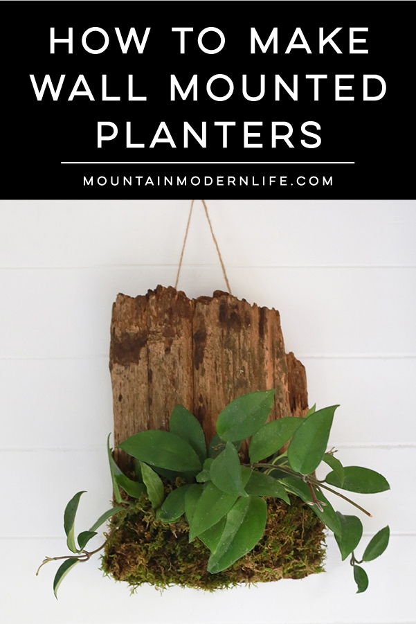 See how easy it is to make living wall art by mounting plants to cork bark flats or driftwood! These are perfect for tiny living, purifying the air, or to keep out of reach from nibbling pets! MountainModernLife.com