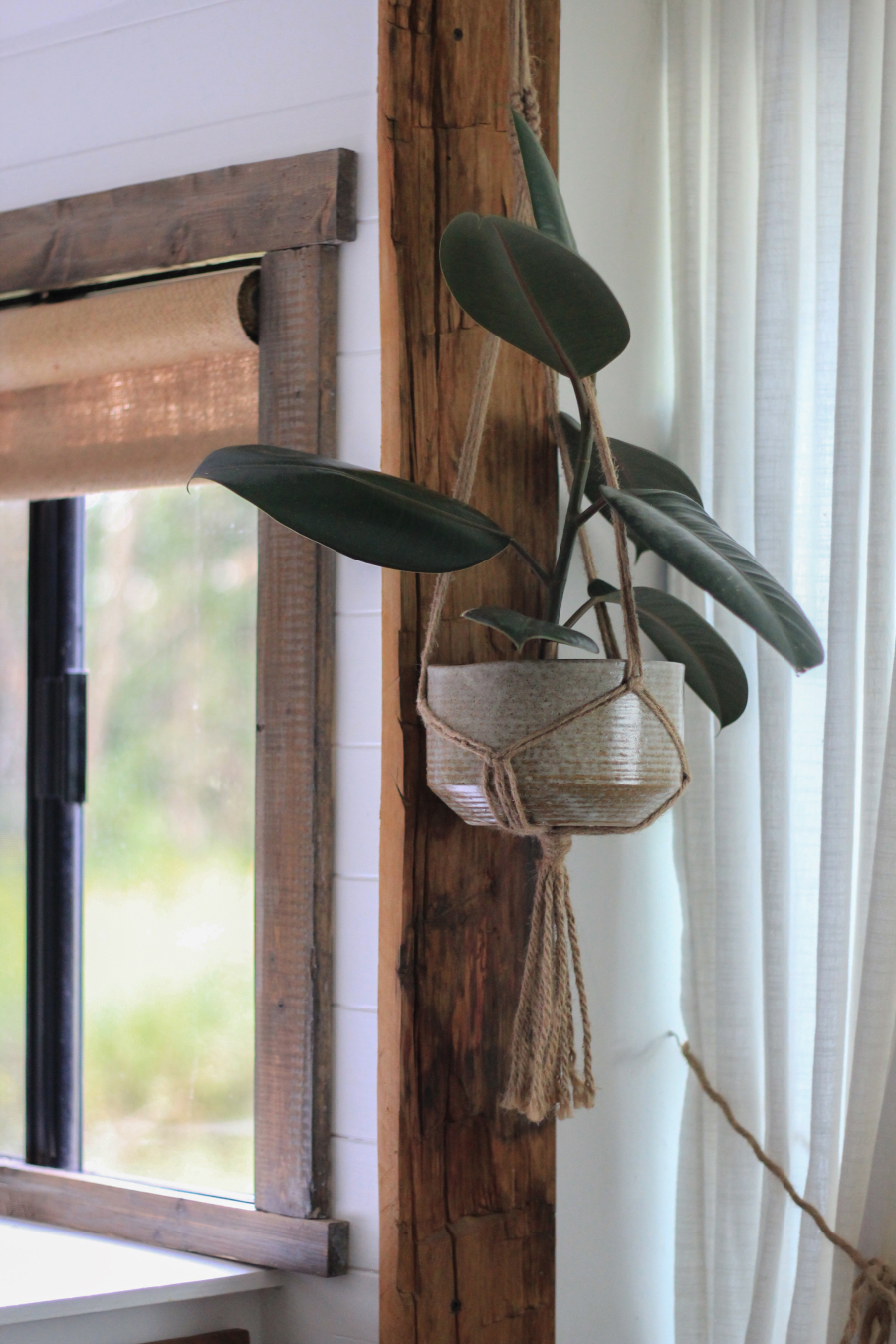 plant hanging from ceramic pot