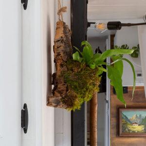 diy cork bark flat planter